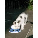 Castron pisici 140ml